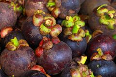Mangosteens at marketplace. Mangosteens in the queen tropical fruit Stock Photos
