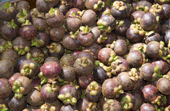 Mangosteens a Thai fruit Stock Image