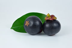 Mangosteens on white background. Asian fruit mangosteen on white background Stock Photos