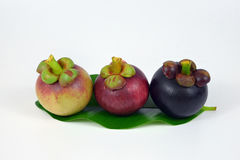 Mangosteens on white background. Asian fruit mangosteen tree colour on white background Stock Photography