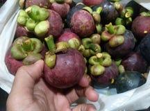 mangoteen Stock Photo