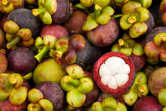 Mangoustan, reine de fruit tropical images stock