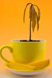 Mangoväxt Fotografering för Bildbyråer