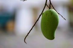 Mangowa owoc odizolowywająca zdjęcie stock