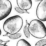 Mangowa owoc odizolowywająca na białym tle Ilustracji