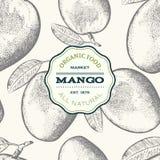 Mangowa owoc odizolowywająca na białym tle Ilustracja Wektor