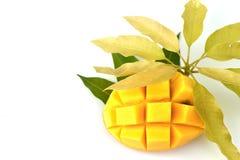 Mangowa owoc z liścia odosobnionym białym tłem Zdjęcie Royalty Free