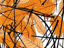 Mangowy liścia spadek ilustracji