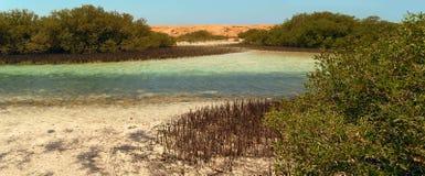 Mangraves dans Sinai Images libres de droits