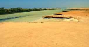 Mangraves en Sinaí Fotografía de archivo libre de regalías