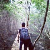 Mangroove Stockfoto
