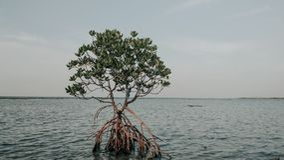 Mangroove at ocean royalty free stock photo