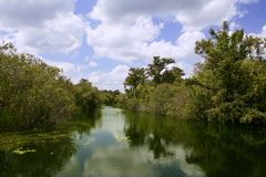 Mangroove river in everglades Florida Royalty Free Stock Images