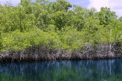 Mangroove river in everglades Florida landscape Stock Photos