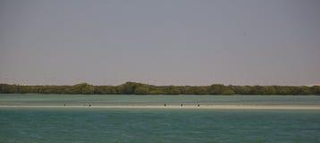 Mangrovar av Al Khor, Qatar royaltyfri foto