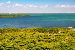 Mangrovar i Cancun Fotografering för Bildbyråer