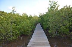 Mangrovar i Martinique royaltyfria bilder