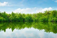 Mangrovar och blå himmel Arkivfoton