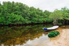 Mangrovar och fartyg Fotografering för Bildbyråer