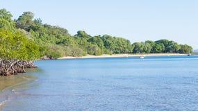 Mangrovar och kustlinje Arkivfoton