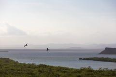 Mangrovar och kustlinje nära Punta Gallinas i La Guajira Royaltyfri Fotografi