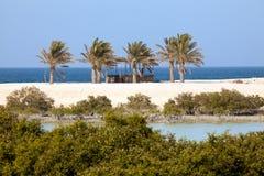 Mangrovar och palmträd på den Sir Bani Yas ön, UAE Royaltyfria Bilder
