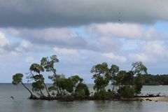 mangrove fotos de stock