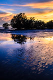 Mangrove Arkivfoto