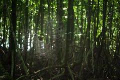 mangrove Arkivfoton