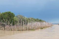 mangrove Stock Afbeeldingen