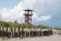 mangrove Stock Afbeelding