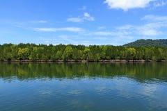 mangrove Lizenzfreie Stockfotos