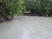 mangrove Stockfotos