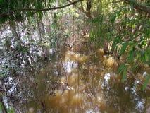 mangrove stock foto's