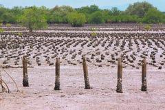 mangrove Royaltyfria Bilder