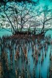 mangrove Lizenzfreies Stockbild