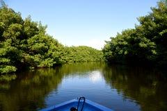 mangrove stock fotografie
