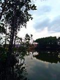 mangrove Imagens de Stock Royalty Free