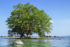 Mangrove in area of low tide and high tide Stock Photos