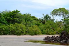 Mangrove in Bahia. Mangrove in Morro de Sao Paulo in Bahia Royalty Free Stock Photo