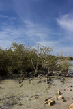 Mangrove Bay Stock Photography