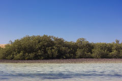 Mangrove Bay Stock Photo