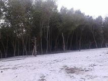Mangrove beach. A mangrove beach in north sumatera Stock Image