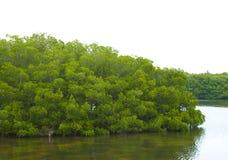 Mangrove Behandeld Eiland of Schiereiland stock fotografie