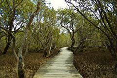 Mangrove boardwalk near Pahia Stock Photography