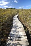 Mangrove boardwalk, Waitangi, New Zealand. This boardwalk crosses the Waitangi river, then this mangrove swamp before the track reaches the Haruru Falls from the royalty free stock photography
