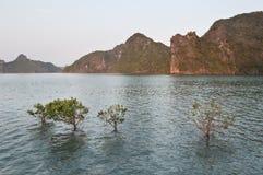 Mangrove Bush im Wasser Lizenzfreie Stockfotografie