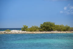 Mangrove bush. In tropical waters at Curacao Royalty Free Stock Photo