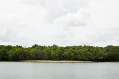 Mangrove canal and harbor Royalty Free Stock Photos