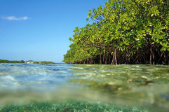 Mangrove in the Caribbean sea from water surface Royalty Free Stock Photos